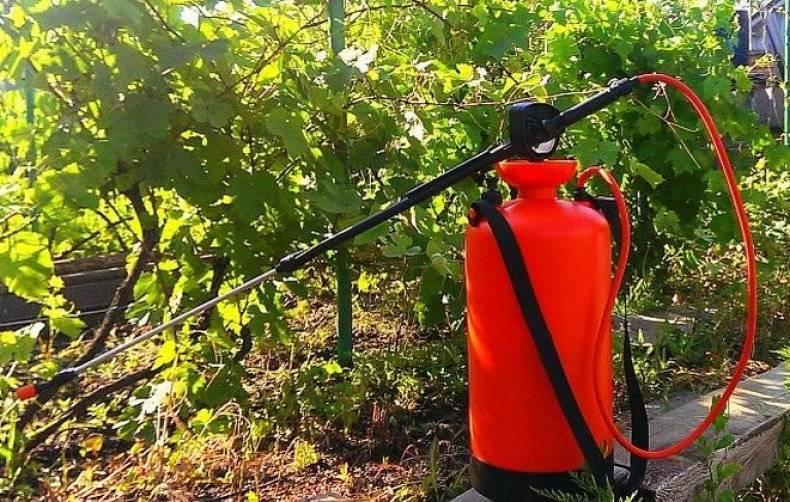 Топ-11 препаратов для обработки винограда от вредителей