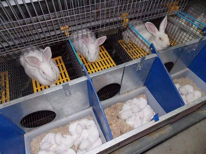 Маточник для кроликов (34 фото): размеры и чертежи. как сделать своими руками? зимняя родилка с подогревом