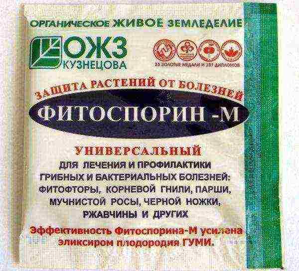 Замачивание лука перед посадкой – зачем проводить процедуру, применение народных и химических средств