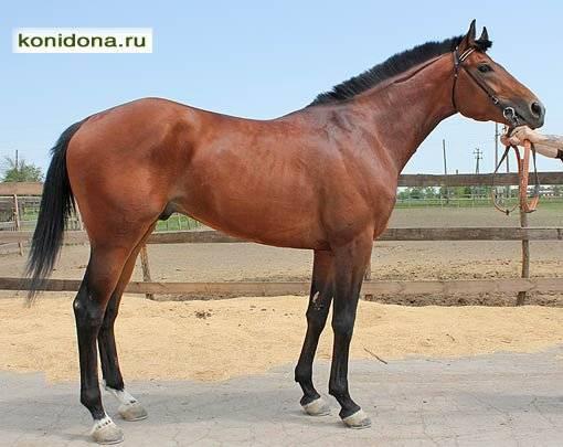 Будённовская лошадь — википедия. что такое будённовская лошадь