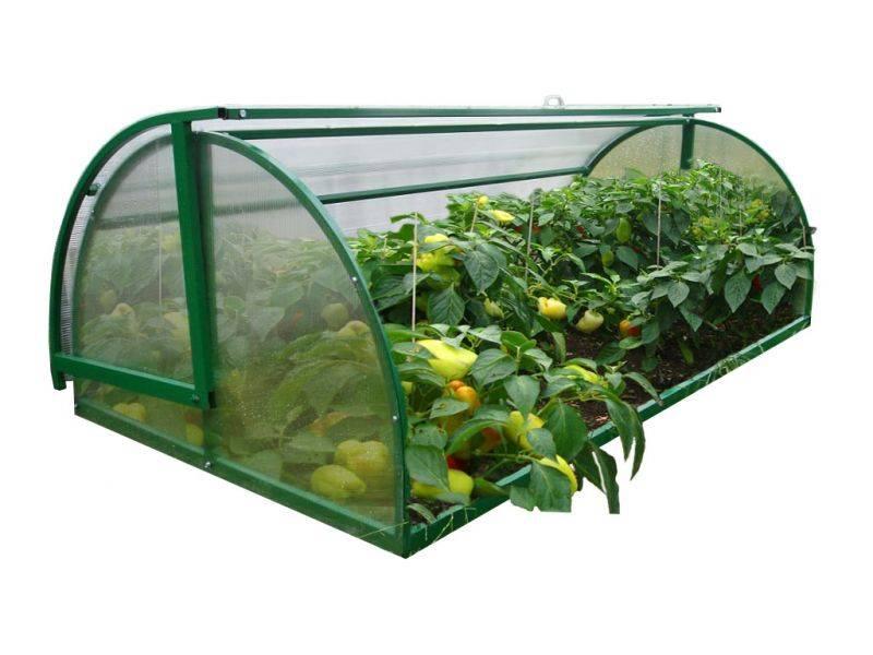 Выращивание кабачков в теплице: как получить высокий урожай?