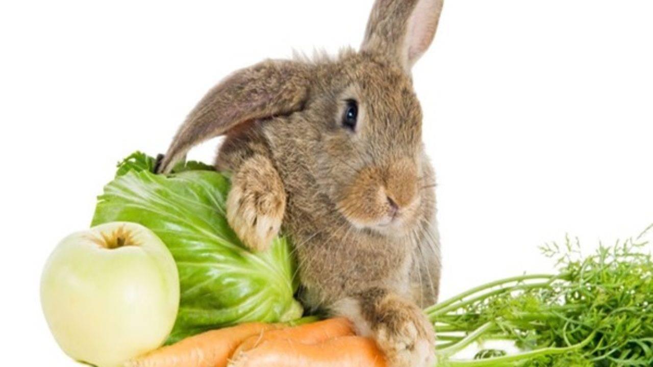 Можно ли давать кроликам кабачки и тыкву