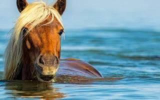 Лошади плавают