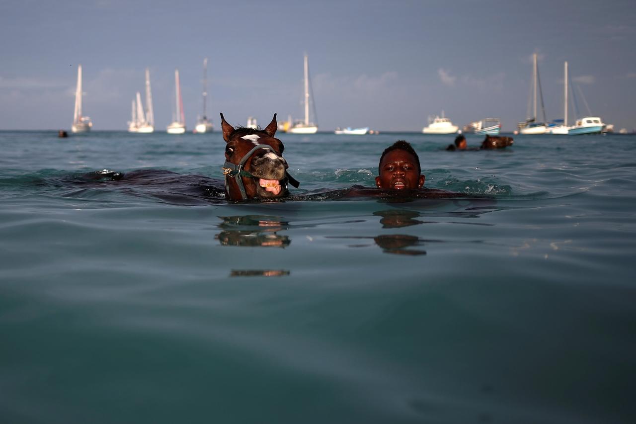 Плавать в воде и видеть плывущих лошадей