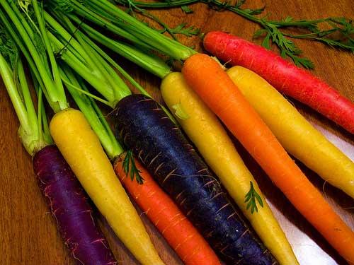 Как быстро прорастить семена моркови