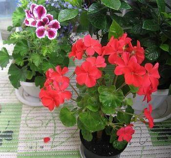 Как и чем удобрять садовые цветы