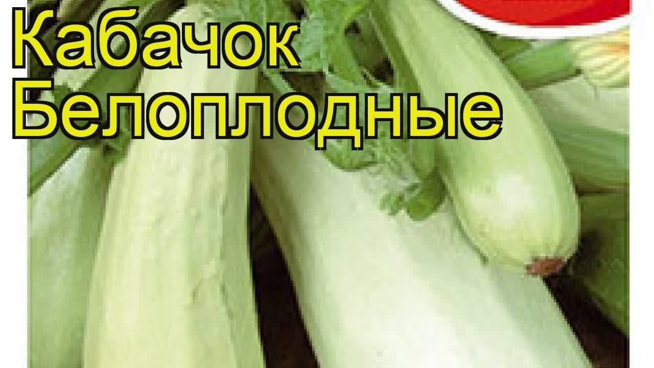 Кабачок белоплодный: популярные сорта, пошаговый посев и уход