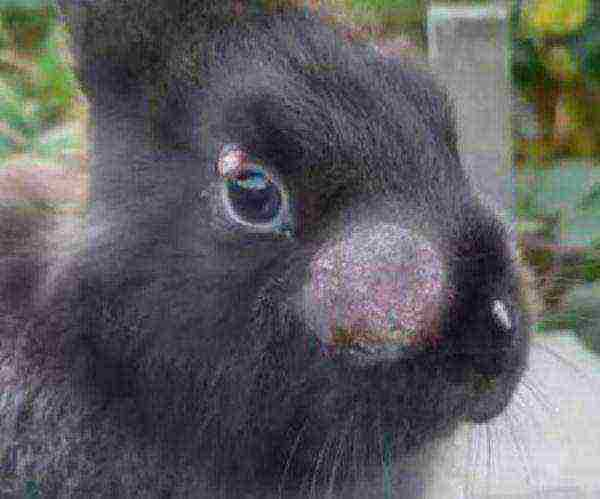 Почему дохнут взрослые кролики и маленькие крольчата