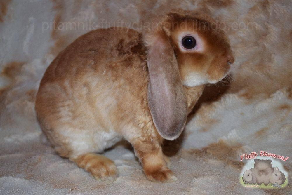 Можно ли трогать новорожденных крольчат