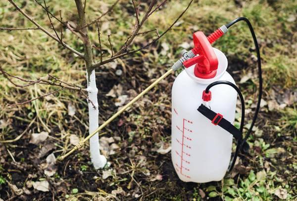 Обработка яблонь весной – надежный фронт защиты от вредителей!