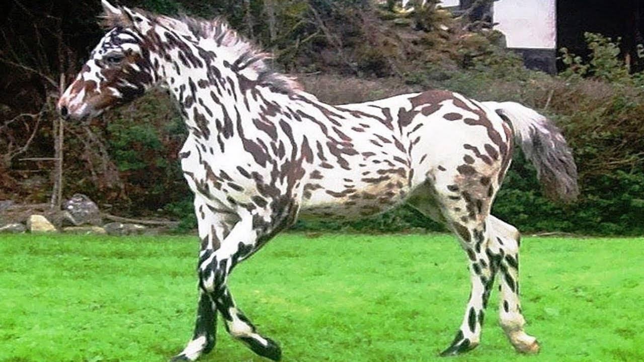 Самые необычные лошади: ТОП редких и красивых мастей и пород лошадей в мире