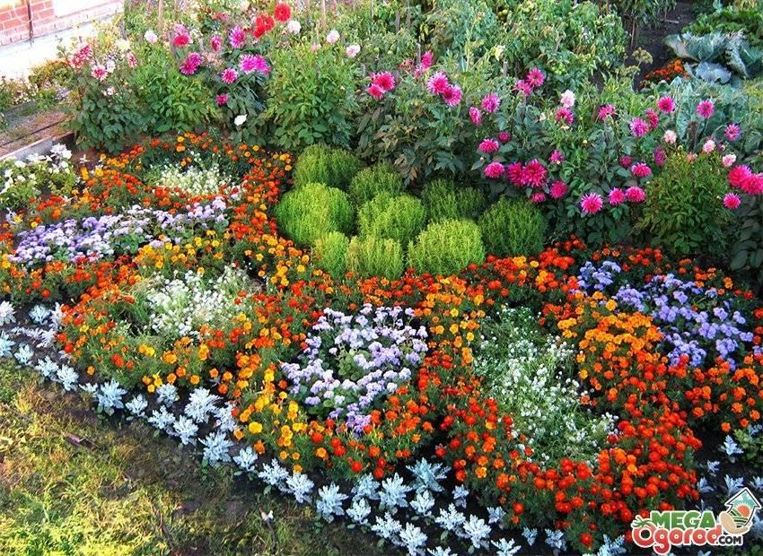 Клумба из многолетников непрерывного цветения: схема посадки