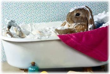 Можно ли купать кроликов: как мыть декоративного кроля в домашних условиях