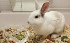 Можно ли кроликам давать крупы. видео – кормление маленьких крольчат. чем и как кормить. польза зерновых культур для животных
