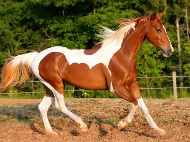 Самые дорогие породы лошадей в мире – список, стоимость, фото и видео