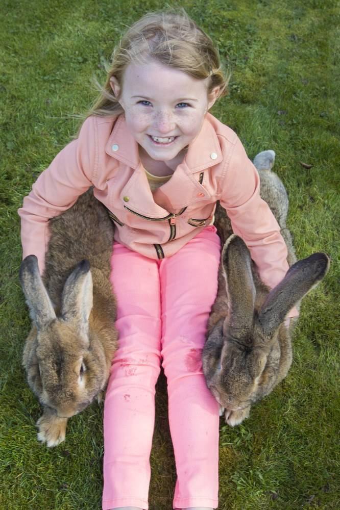 Высокопродуктивная порода кроликов серый великан