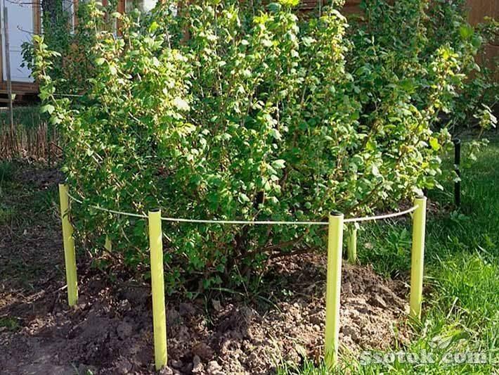 Как сделать подпорки для плодовых кустарников своими рукми