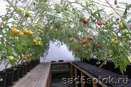 Парник для огурцов: как вырастить лучший урожай