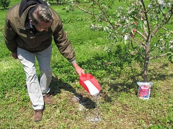 Все о подкормке плодовых деревьев: чем удобрять весной и летом, средства