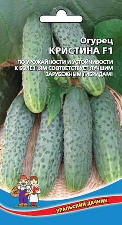 Огурцы кустовые: лучшие сорта для открытого грунта