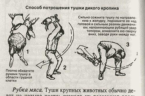 Как правильно забить кролика - подробная инструкция с фото и видео | россельхоз.рф