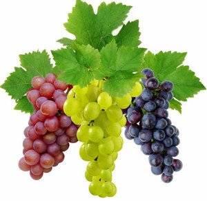 Полный список фунгицидов для винограда. какие фунгициды применяют на винограднике