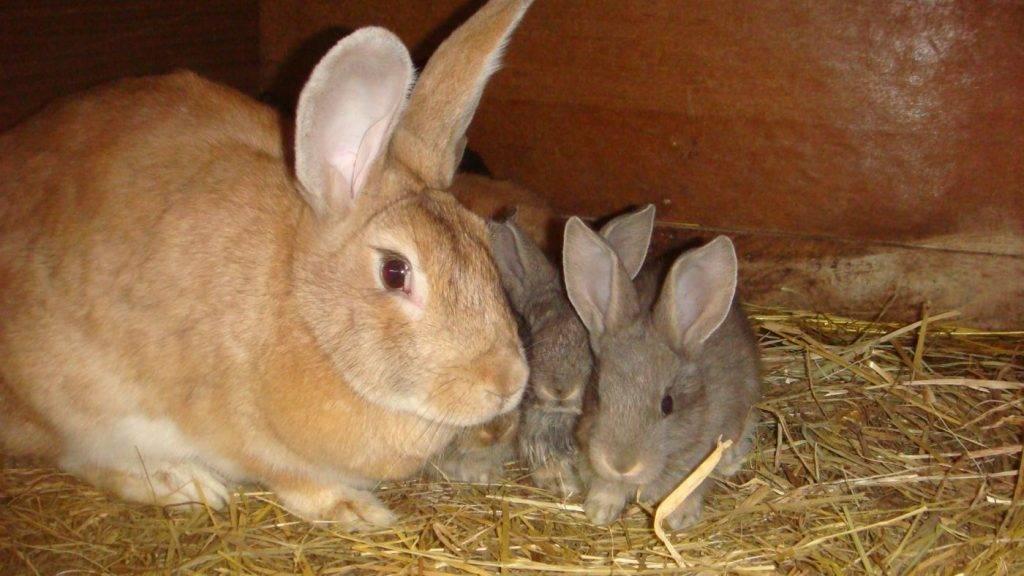 Когда можно смотреть крольчат после окрола