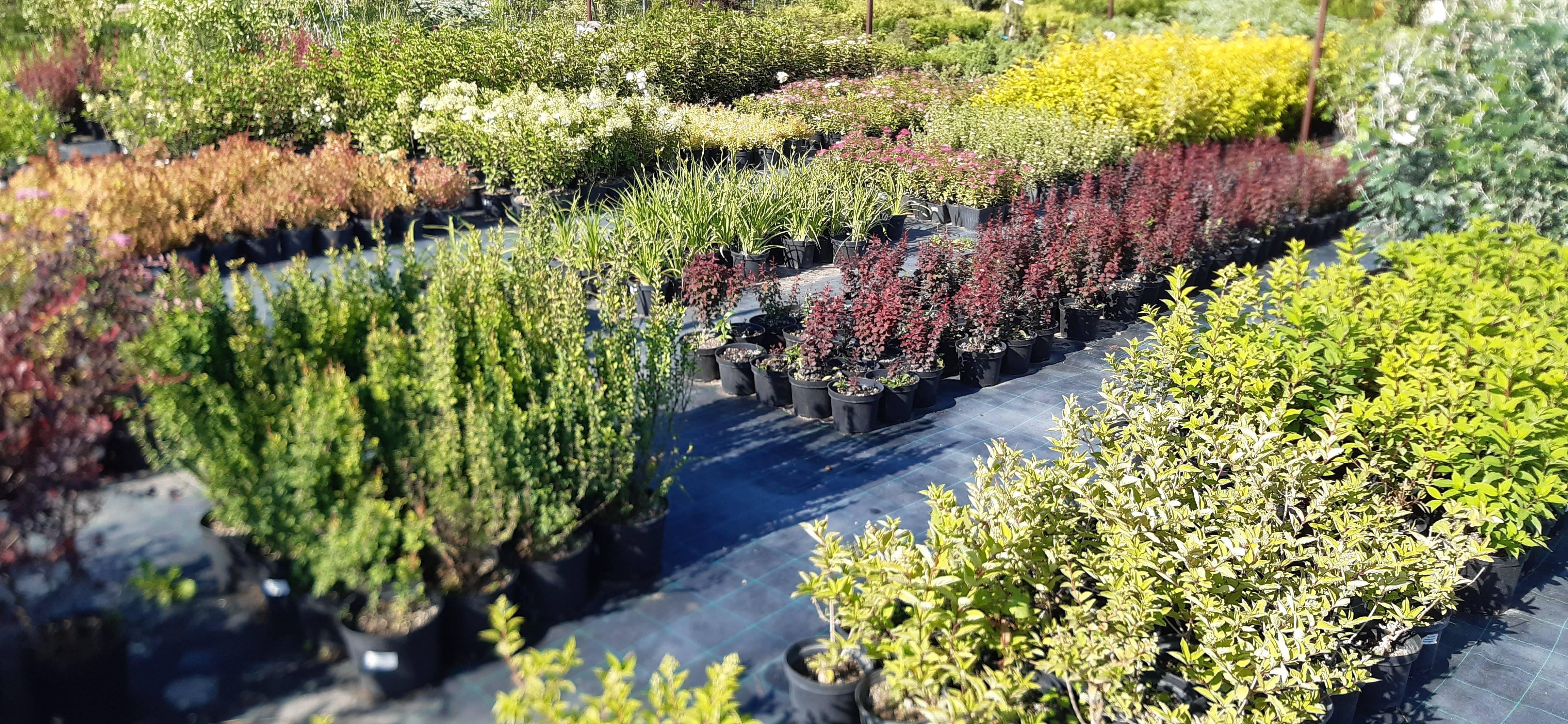 Что можно посадить и успешно вырастить на даче в тени?