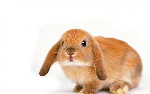 Прививки кроликам: какие и когда делать, схема вакцинации