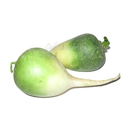 Зеленая редька: описание, посадка, агротехника выращивания, полив