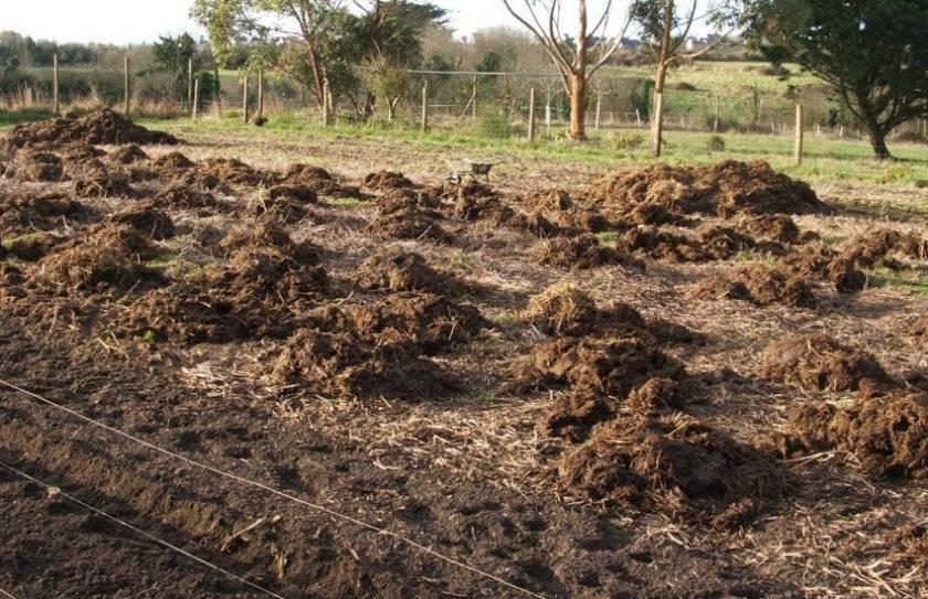 Какое удобрение вносить осенью под картофель, как подготовить почву?
