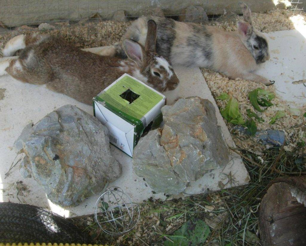 Как держать кроликов зимой?