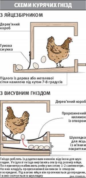 Гнезда для кур несушек своими руками: 3 лучших варианта + пошаговые инструкции!