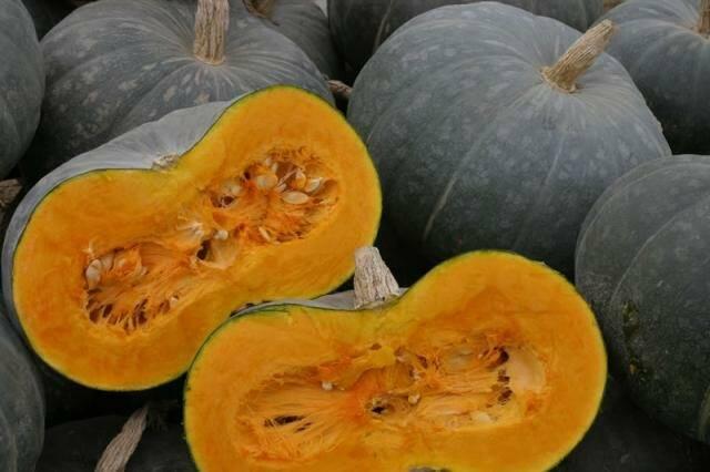 Чем полезна тыква для организма человека: лечебные свойства мякоти, семян и цветов + какие есть противопоказания