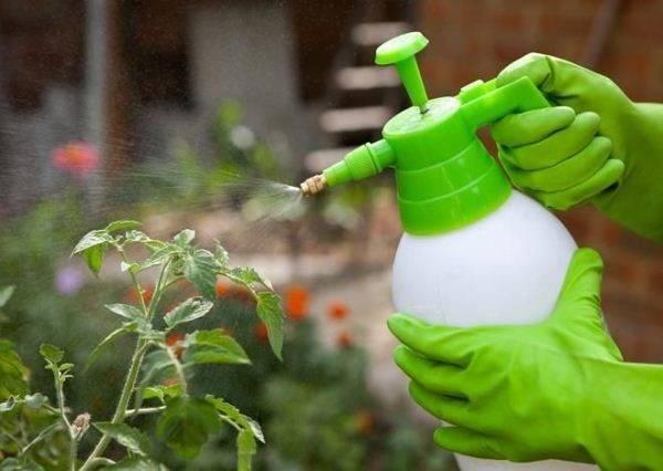 «эпин-экстра» для комнатных растений: инструкция по применению. как разводить и применять для опрыскивания цветов?