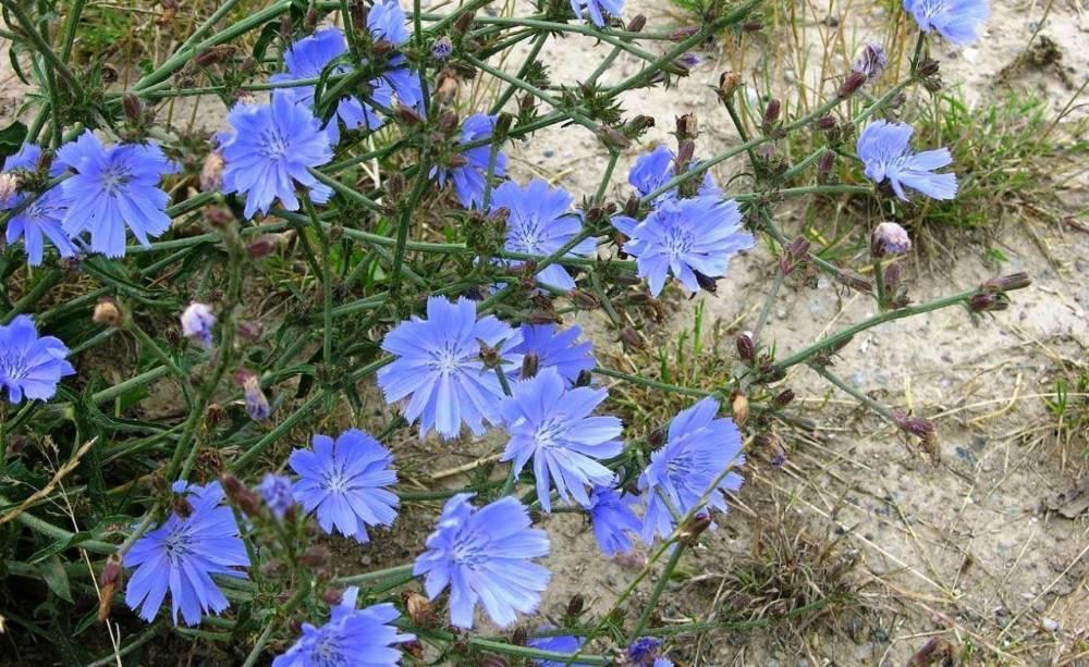 Как вырастить дикие цветы из семян