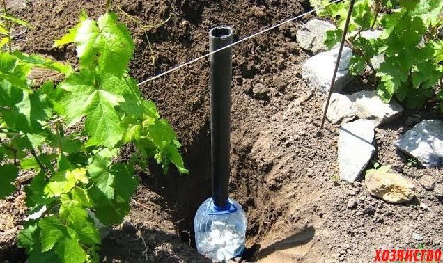 Когда и как часто поливать виноград весной, летом и осенью: правила и способы полива