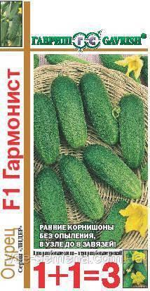 Все о сорте огурца трилоджи: описание, агротехника выращивания и уход