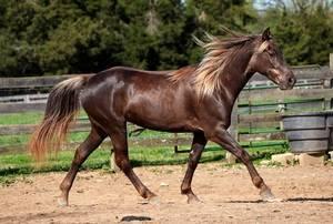 Саврасая масть лошади