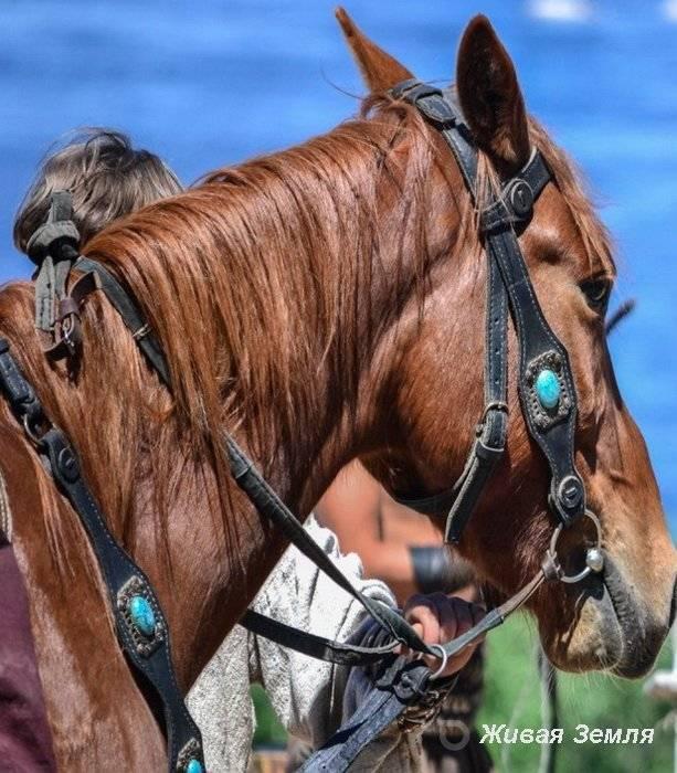 Сбруя для лошадей – гужевая конная упряжь 2020