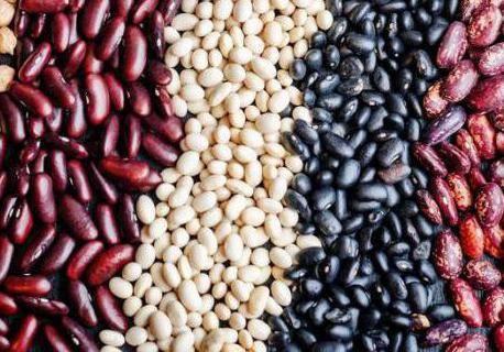 Как готовить бобы: разные виды бобов, разные виды фасоли. бобы и фасоль: в чем разница