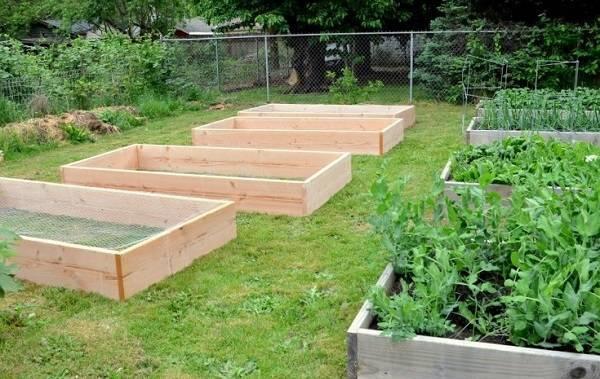 Как выращивать огурцы?