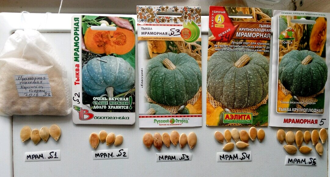 Тыква: выращивание и уход в открытом грунте, посадка для хорошего урожая, агротехника с видео