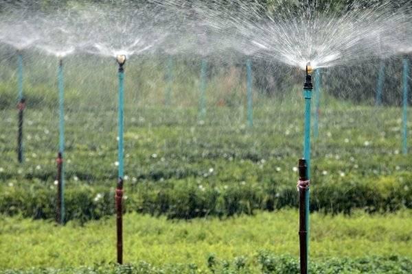 Дезинфекция семян огурцов в перекиси водорода перед посевом