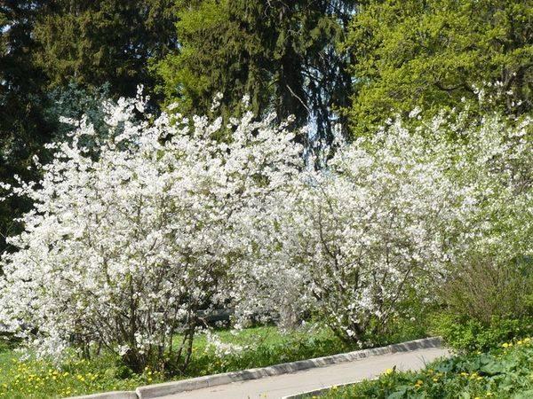 Что посадить рядом с яблоней: хорошие и плохие соседи в саду - etocvetochki.com
