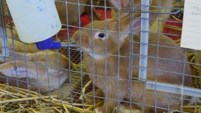 О поилках для кроликов: виды, как сделать своими руками в домашних условиях