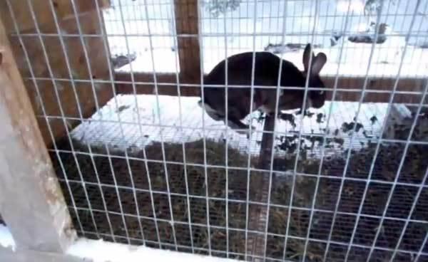 Как держать кроликов в клетках