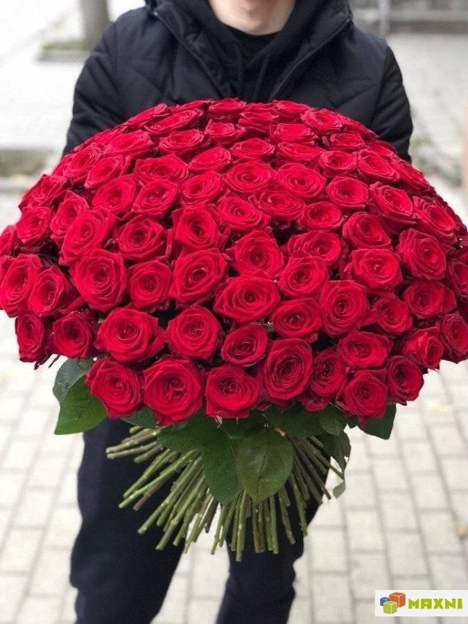 Мифы, легенды и интересные исторические факты о розах