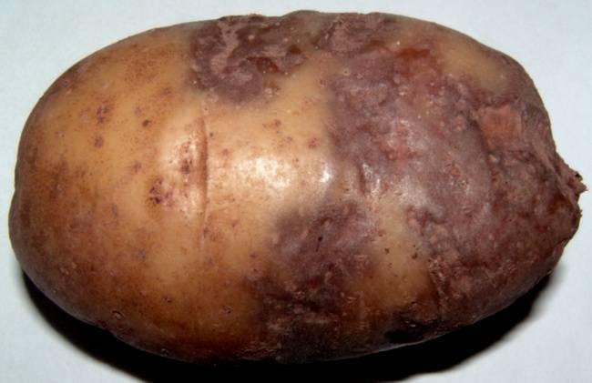 Борьба с фитофторой на картофеле. 3 народных способа как бороться с фитофторой на картофеле. | красивый дом и сад