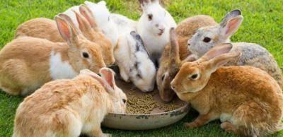 Какими травами можно и нельзя кормить кроликов